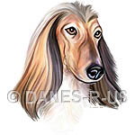 Afghan Hound - Red