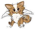 Hapi Puppy Chihuahua Angel