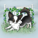 Garden Fence Chihuahua- Tri Long Play Bow