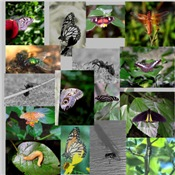 Insect/Bug Photo Gifts