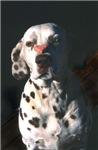 Dalmatian Lonely Heart