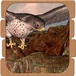 Flight of The Gyr Falcon