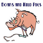 Cute Boar & Wild Pig Designs