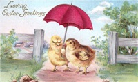 Loving Chicks
