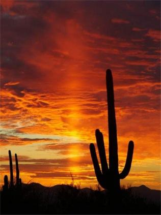 Saquaro Sunset