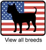 American Dog Breed
