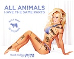 All Animals Have the Same Parts