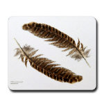 Pheasant Feathers - Housewares and Miscellany