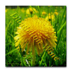 Dandelion Wine Gifts