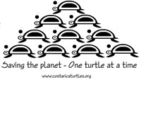 Saving the Planet, One Turtle at a Time