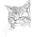 Cute Kitten Illustration