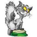 Cute Kitten T-shirt & Gift