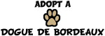 Adopt a DOGUE DE BORDEAUX