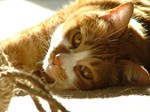 Cat Nap photography