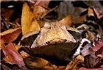 Viper camuflage