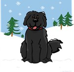 Newfie - Snow (Sq)