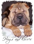 HUGS AND KISSES (SHAR PEI)