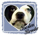 BOSTON TERRIER BREEDER 