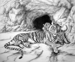 Endangered Sumatran Tigers by Marc Brinkerhoff