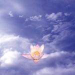 Zen Lily by Marc Brinkerhoff