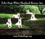 Echo Dogs Classic