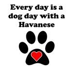 Havanese Dog Day