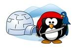Pirate Penguin In Antarctica