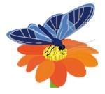 Butteryfly On Flower