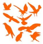 Orange Eagles Silhouette