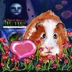 GUINEA PIG Valentine