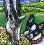 BOSTON TERRIER w Horse pal