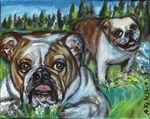 English Bulldogs Gus & Haddy lounge