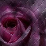 Tiled Rose