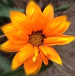 Orange's Sunshine, Photo Artwork