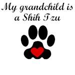 Shih Tzu Grandchild
