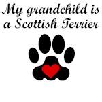 Scottish Terrier Grandchild