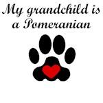 Pomeranian Grandchild