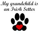 Irish Setter Grandchild