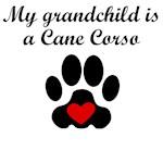 Cane Corso Grandchild