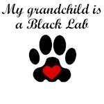 Black Lab Grandchild