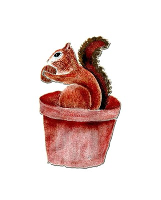 SQUIRREL EATING A NUT IN A FLOWER POT