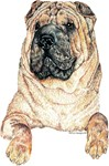 Crinkely Chinese Shar Pei Dog Products & Gifts