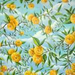 The Orange Tree Collection