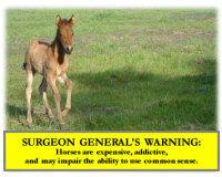 Warning, Gaited Foal