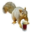 Squirrel Mug Beer