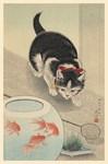 Cat, Goldfish