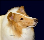 White Rough Collie items