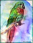 Parrot, colorful, bird,