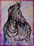 Zebra, wildlife art!