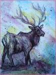 Elk! Wildlife art!